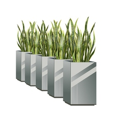 row of pots with green plant sansevieria vector image vector image