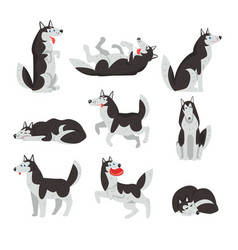 Siberian husky character sett dog in different vector