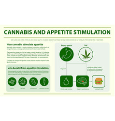 cannabis and appetite stimulation infographic vector image