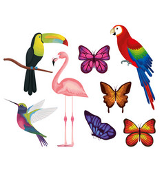 Exotic and tropical birds and butterflies vector