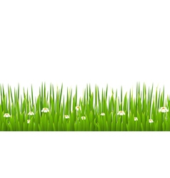 Green grass with blooming chamomiles isolated vector