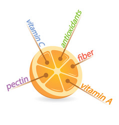 Orange content properties and benefits vector