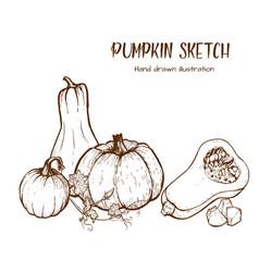 Pumpkin drawing set vector