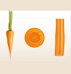 realistic of orange carrot vector image