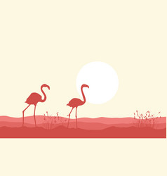 silhouette of flamingo beauty landscape vector image