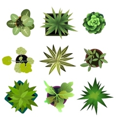 Top view plants Easy copy paste in your landscape vector image