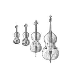 bowed string instruments vector image