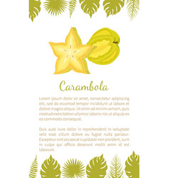 Carambola or starfruit exotic fruit poster vector