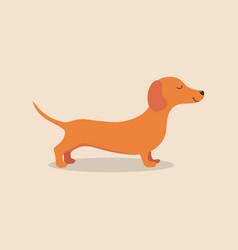 Dachshund dog animal vector