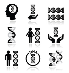 Human DNA genetics icons set vector image vector image