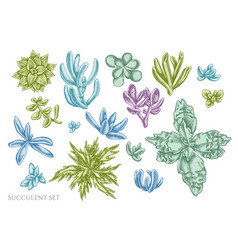 Set hand drawn pastel succulent vector