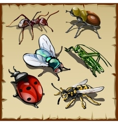 Big set of different insects six varieties vector