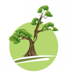 bonsai tree vector image
