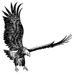 fighting eagle vector image