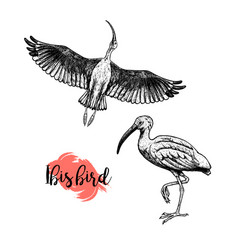 hand drawn ibis skethes of birds vintage vector image