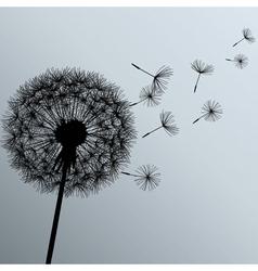 Flower dandelion on gray background vector image