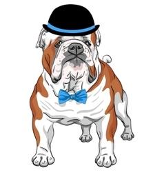 hipster dog English Bulldog breed vector image