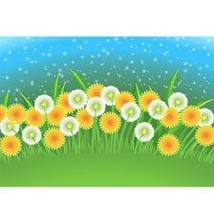 Dandelions field vector image