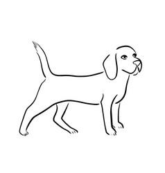 beagle dog vector image vector image