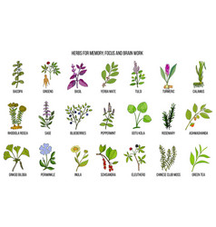Best medicinal herbs for memory focus and brain vector