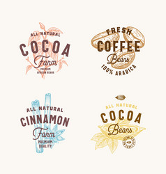 Cinnamon anise spices cocoa and coffee abstract vector