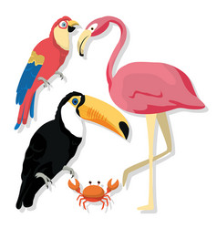 Exotic birds cartoons vector