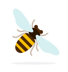 honey bee at an angle flat isolated vector image