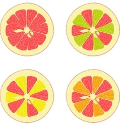 Lemon lime orange pink grapefruit vector