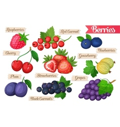 Set juicy berries vector