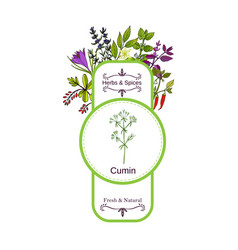 vintage herbs and spices label collection cumin vector image