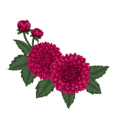beautiful bouquet dahlias with the effect of a vector image