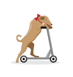 circus trained dog on a scooter vector image