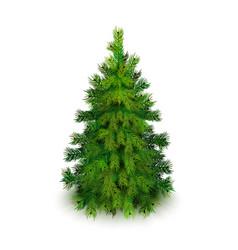 Stock realistic christmas tree vector