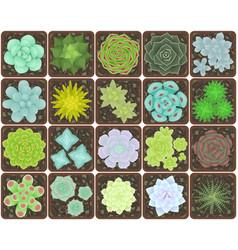 Set succulents in pots vector