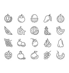 tropical fruit icon set vector image