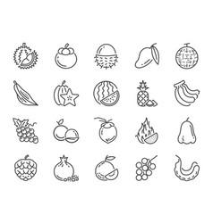 Tropical fruit icon set vector