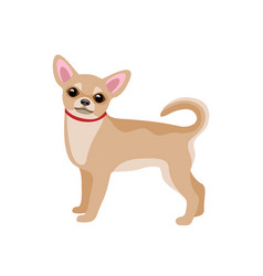 small dog isolated on white vector image vector image