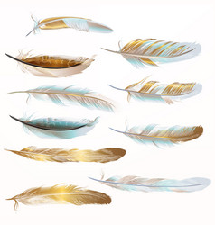 collection golden feathers for design vector image