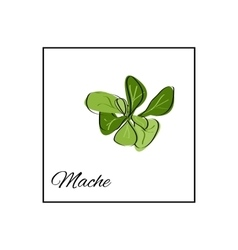 Mache Isolated drawn herbs on white vector