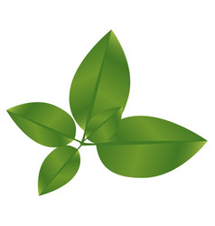 realistic green leaves with branch nature icon vector image