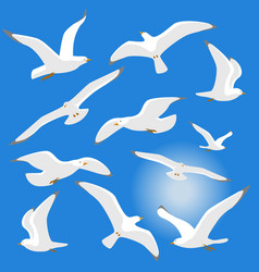 Seagulls isolated on blue background vector