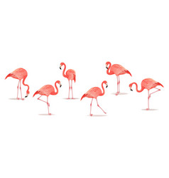 set exotic flamingos isolated on white vector image