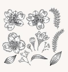 Spring flowers set hand drawn alstroemeria vector