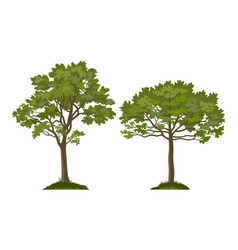 trees pine and maple vector image