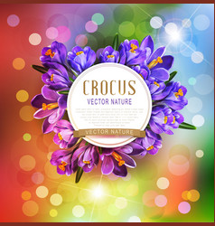 festive background with blue crocuses vector image