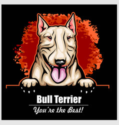 bull terrier - peeking dogs - breed face head vector image