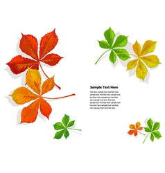 Fall colorful chestnuts leaves vector