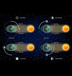 lunar and solar tides diagram vector image