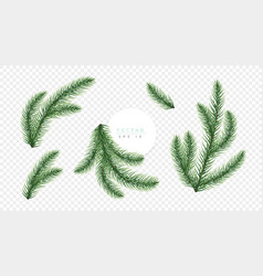 Realistic green christmas tree branches isolated vector