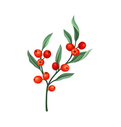 Rowanberry twig with green leaves isolated on vector
